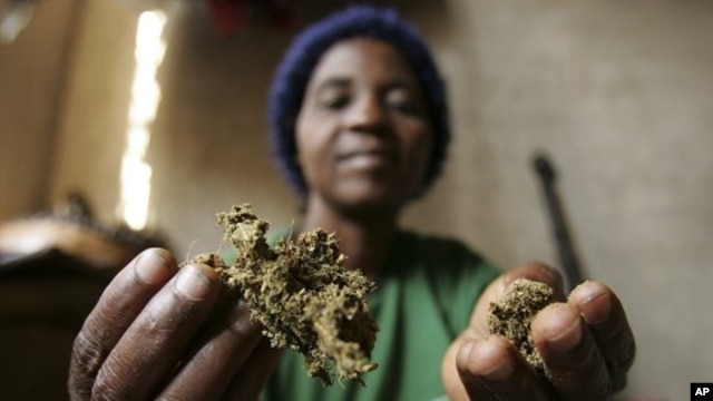Zimbabwean healer Martha Katsande shows a traditional medicine in her surgery in Harare (File Photo).