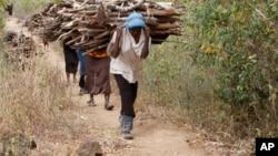 Une femme sort de la forêt en portant du bois pour cuisiner, à Tsavo, Kenya, le 20 juin 2014.