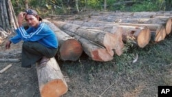 Jan. 15, 2001 file photo, a Myanmar logger sits on a pile of timber which is waiting to be cut, in the jungles of central Myanmar. There has been a sharp decline in timber illegally imported into China from Myanmar, but smugglers are stil