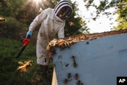 Beekeeper James Cook works on hives near Iola, Wis., on Wednesday, Sept. 23, 2020.
