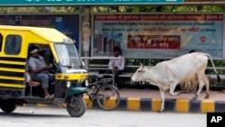 Seekor sapi liar berjalan di jalanan Allahabad, India, Senin 29/5 (foto: ilustrasi).