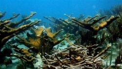U.S. Supports Coral Reef Conservation