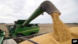 美国印第安纳州农民正在驾驶收割机收割大豆。(2018年9月21日)