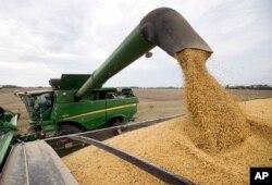 美國農民從聯合收割機卸下大豆(資料圖)
