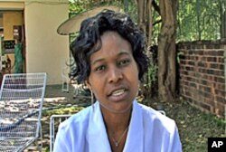 Zimbabwe Human Rights Association coordinator Olivia Gumbo