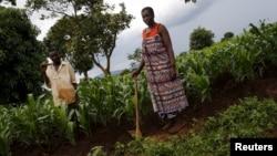 Petani Malawi bekerja di ladangnya di Dowa dekat ibukota Malawi, Lilongwe (foto: dok).
