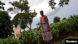 Wakulima wa mahindi eneo la Dowa nchini Malawi. Feb. 3, 2016.