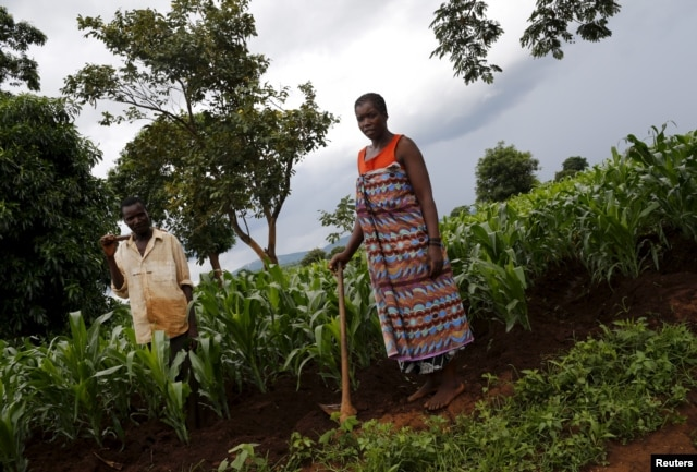 FILE - Malawian subsistence farmers Simon Sikazwe (L) and Cecelia Kazibuta (R) stand beside communal maize fields in Dowa. Food shortages were allegedly among the subjects discussed.