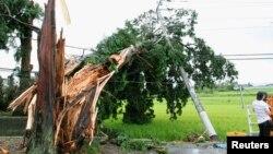 Cây cối và cột điện bị ngã sau trận bão Hạ Long tại thị trấn Minobu, quận Tochigi, Nhật Bản, ngày 10/8/2014.