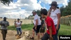 """Turis berinteraksi dengan anak singa di """"Lion and Safari Park"""" dekat Johannesburg, Afrika Selatan, 7 Februari 2020. (Reuters / Tim Cocks)"""