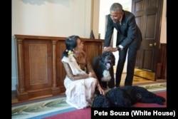 2016年9月4日,缅甸国务资政昂山素季访问白宫,在会见奥巴马总统后,看望奥巴马的两只爱犬,波和桑尼。