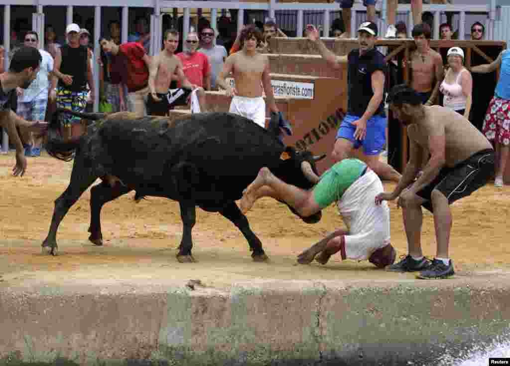 """Seorang penonton terkena tandukan banteng pada festival """"Bous a la Mar"""" di Denia, Spanyol timur."""
