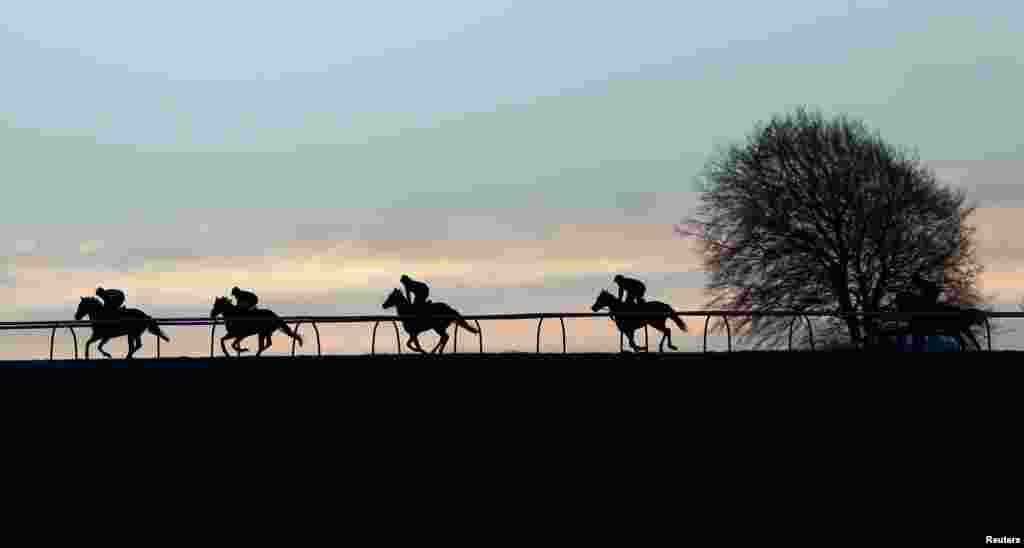 Racehorses galloping in the early morning at Upper Lambourn, southern England