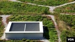 Los individuos y los restaurantes han empezado a plantar su propia comida en los únicos espacios que tienen disponibles.