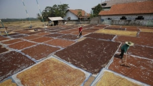 Farmers use rakes to dry cloves, commonly used in locally manufactured cigarettes, near Purwakarta, West Java, Indonesia, August 25, 2015.