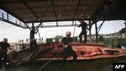 Японські китобої розрізають тушу кита. Японія 2007-й рік.