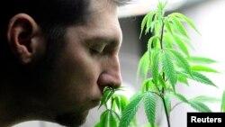 Seorang pasien mencium tanaman ganja yang dibelinya di Canna Pi, sebuah apotik di Seattle, negara bagian Washington, 20 November 2012 (Foto: dok).