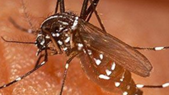 Spray Shows Promise in Malaria Study in Benin