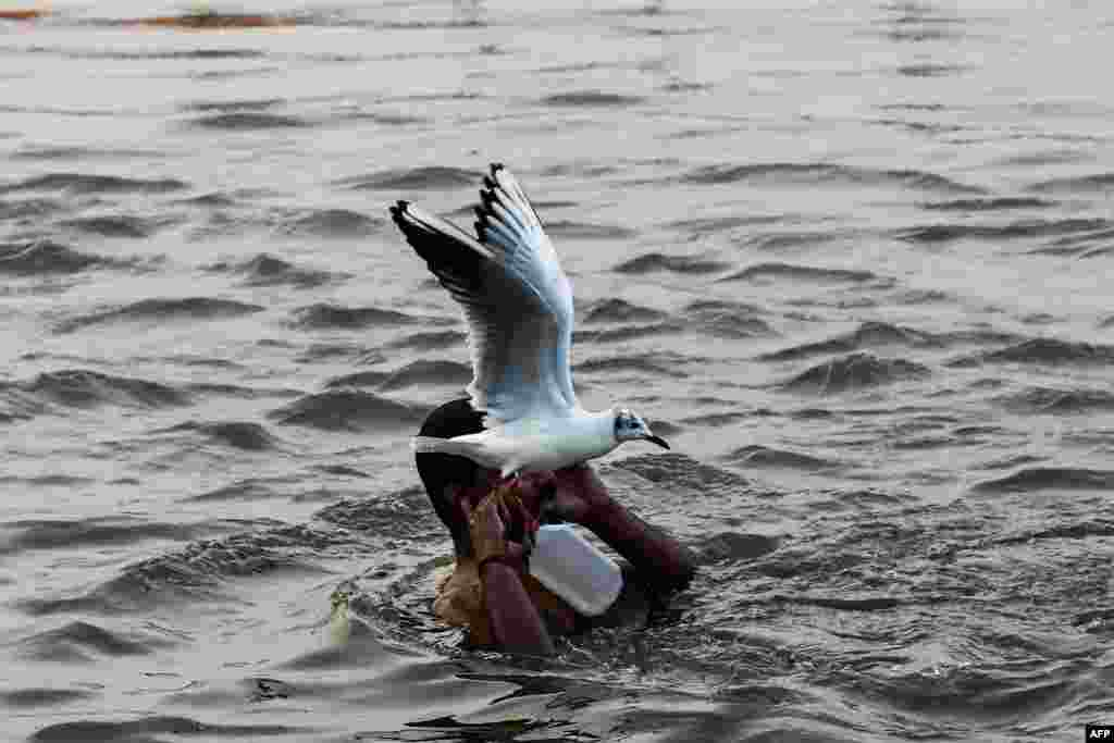 A seagull flies past an Indian devotee in the Triveni Sangam, the meeting of the Ganges, Yamuna and mythical Saraswati rivers, as people gather for the Kumbh Mela festival in Allahabad.
