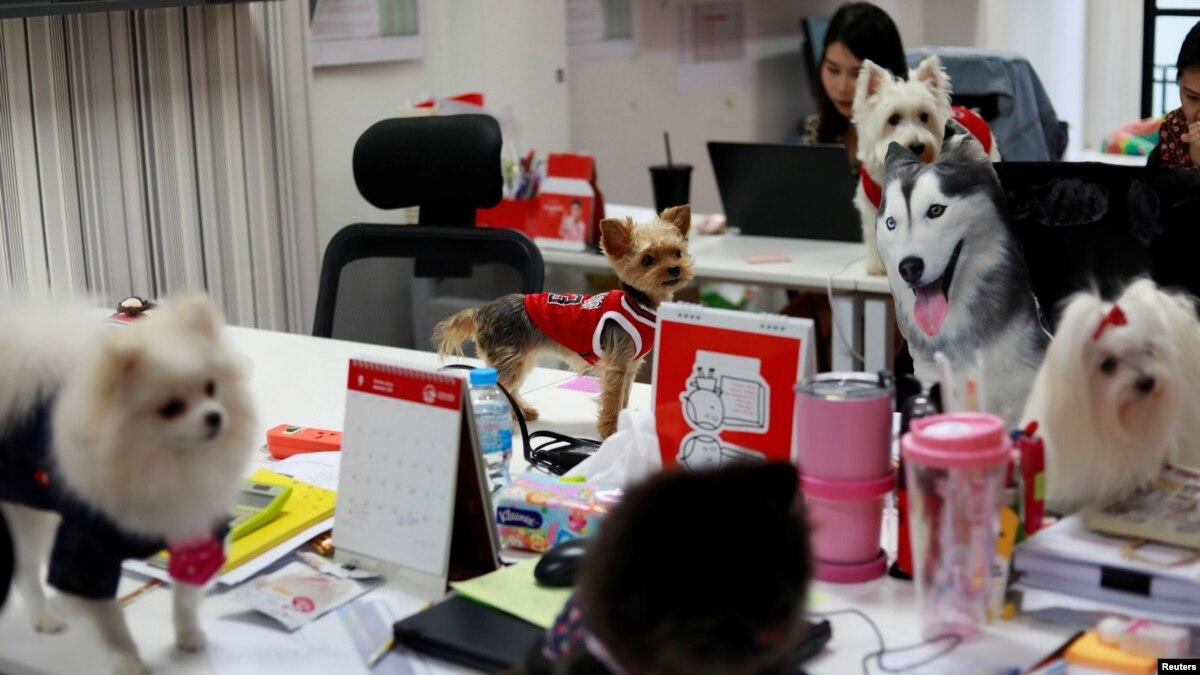 Image result for Hewan Peliharaan di Kantor