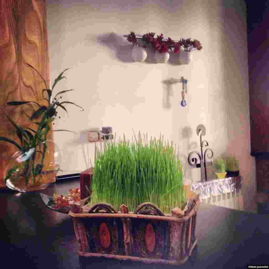سبزه نوروزى در خانه نوروز ١٣٩٣ عکاس: مهيار احمدى