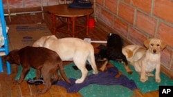 This 2005 photo provided by U.S. Drug Enforcement Administration officials shows puppies rescued from a farm in Colombia destined for use by a U.S. veterinarian working for a Colombian drug-trafficking ring. Veterinarian Andres Lopez Elorza used the puppi