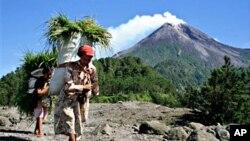 ຜູ້ຍິງໃນເກາະຈາວາ ກໍາລັງແບກເອົາຫຍ້າທີ່ກ່ຽວມານັ້ນ ໄປເກືອງົວຄວາຍ ຂອງພວກເຂົາເຈົ້າ. ຢູ່ເບື້ອງຫລັງ ແມ່ນພູໄຟ Mount Merapi ທີ່ເມືອງ Yogyakarta, ອິນໂດເນເຊຍ, ວັນທີ 20 ຕຸລາ 2010.