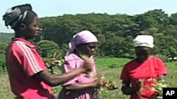 The FAO says many of the world's 500 million smallholder farmers are women.