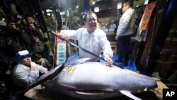 Kiyoshi Kimura, center, president of Kiyomura Co., poses with a bluefin tuna he bought at the annual New Year auction, at his Sushi Zanmai restaurant near Tsukiji fish market in Tokyo, Jan. 5, 2018. This year's top per kilogram price, for a smaller tuna, was $1,419.