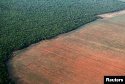 资料照片:巴西西部的亚马逊热带雨林被砍伐后整理出农田用于种植大豆。(2019年10月4日)