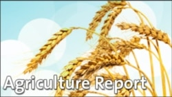 Agriculture Report