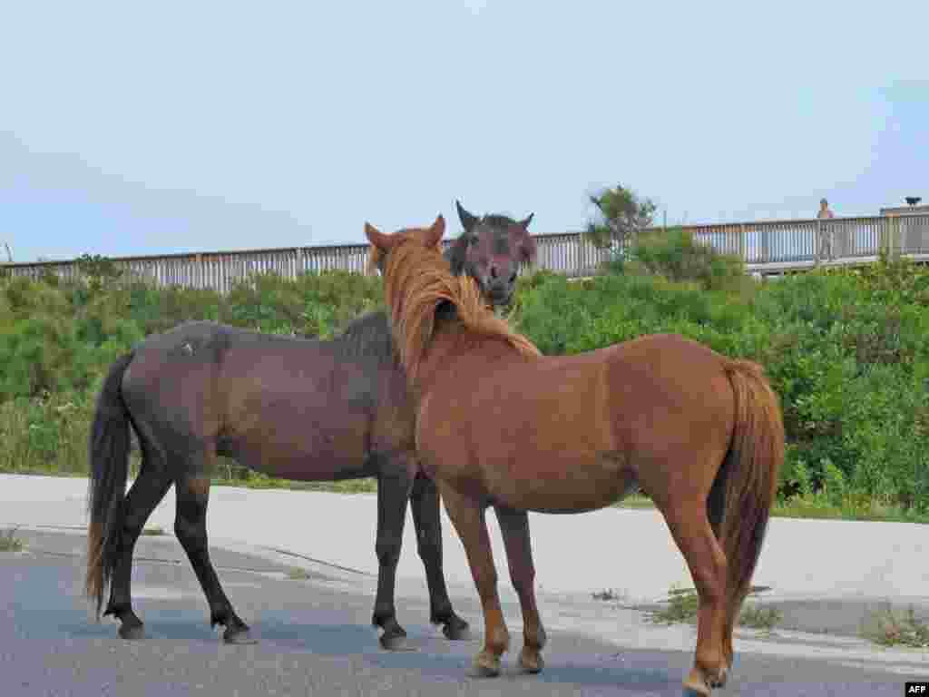 Дикие лошади Ассатиги