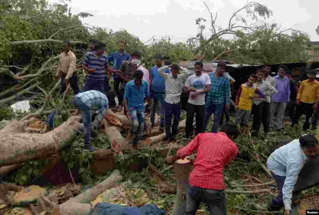 Des troncs d'arbres ont été déracinés après des vents violents et une tempête de sable à Alwar, dans l'état de Rajasthan, en Inde, le 3 mai 2018.