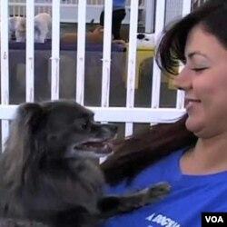 """Di tempat penitipan hewan """"A Dog's Day Out"""" di Alexandria, Virginia, orang bisa membawa anjing mereka untuk bermain seharian atau menginap."""