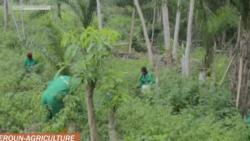 Projets agricoles au Cameroun: 2 000 jeunes formés