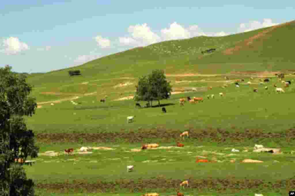 内蒙古锡林郭勒大草原