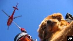 Psi za spašavanje iz lavina na službi u Vancouveru