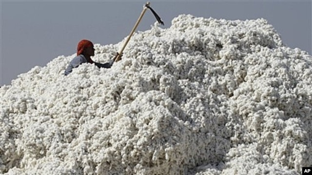 Indian laborer at cotton mill in Dhrangadhra, about 110 kilometers from Ahmadabad, India, Dec. 11, 2011.