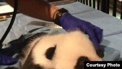 Bei Bei el panda se despide de Washington DC