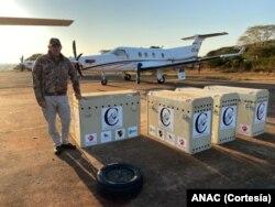 Cinco aviões transportaram os animais até Marromeu