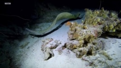 Scientists Study Climate Change in Ocean's Midnight Zone