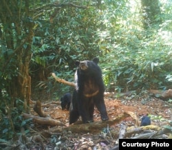 An Asian black bear and her cub are seen at a wildlife sanctuary in Myanmar's northern Karen state.
