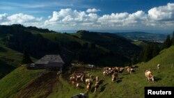 瑞士西部的高山草场
