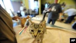 Kucing liar (Foto: dok.)