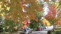 Autumn Leaves Show Their True Colors