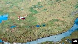 Самолет пролетает над стадом оленей. Северо-восточная Аляска (архивное фото)