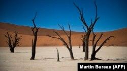 Arbres morts dans le désert de sel de Sosusvlei en Namibie,14 mai 2015.