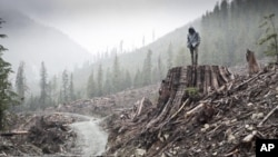 'If a Tree Falls' explores whether radical environmental activists trying to prevent corporations from destroying the land are freedom fighters or domestic terrorists.