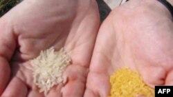 Gạo vàng và gạo trắng