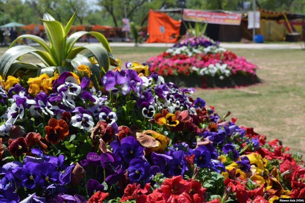 موسم بہار میں دلکش رنگوں کے پھول ماحول کو حسن بخشتے ہیں۔